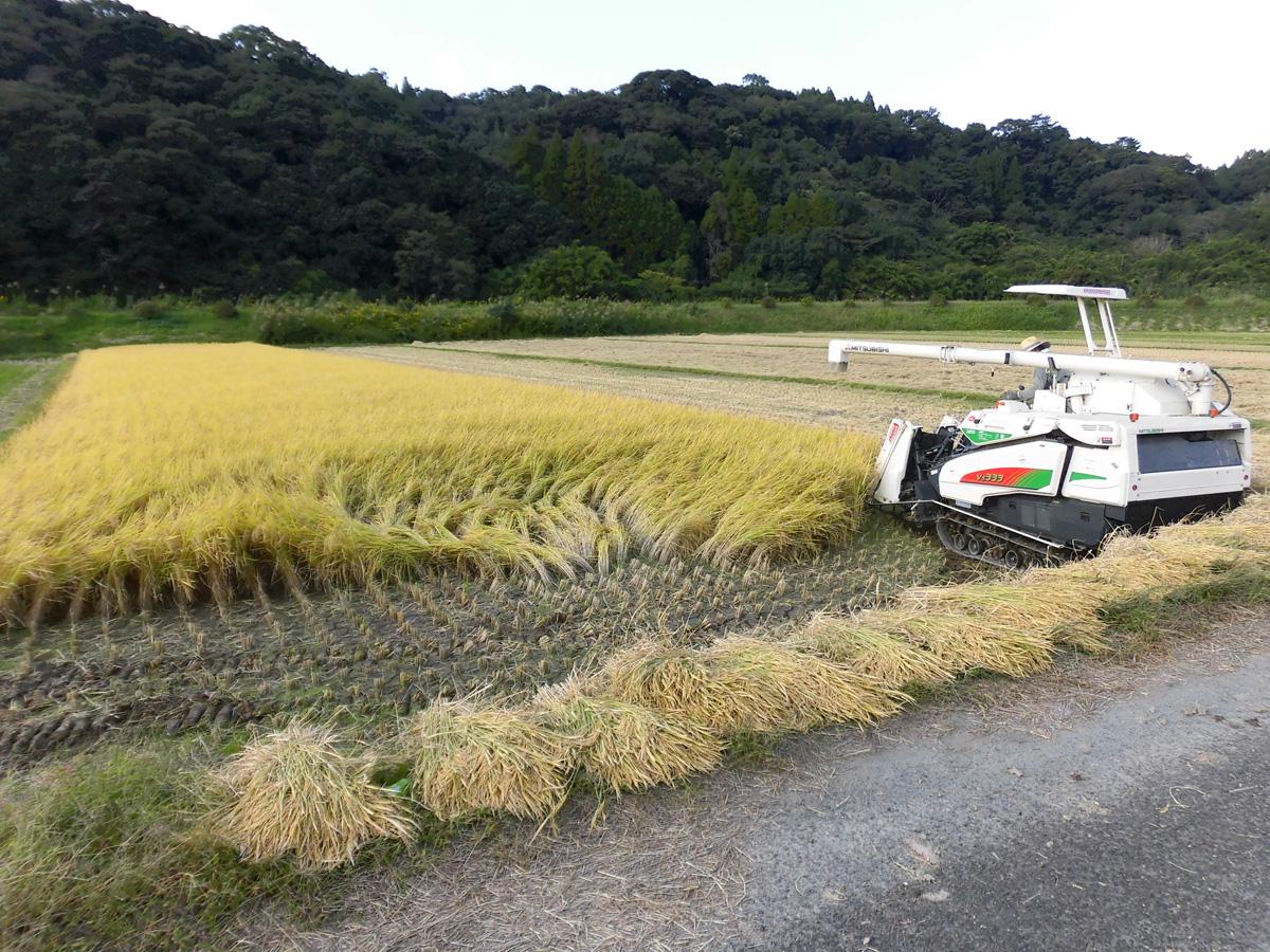 農業(稲作)